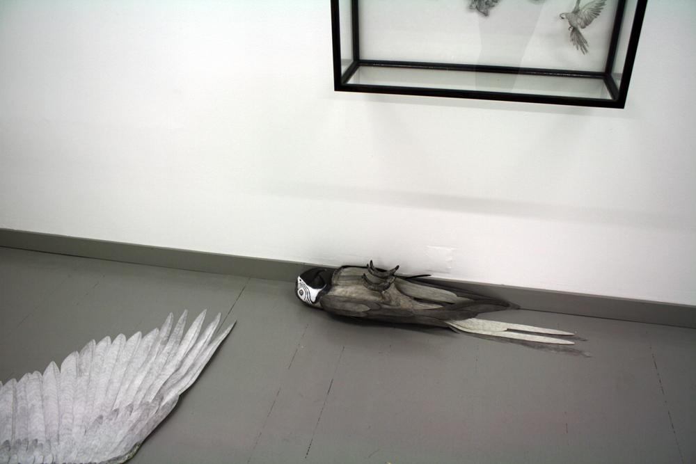 parrot-på-gulvet